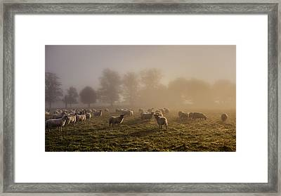 Shepherding Framed Print by Chris Fletcher