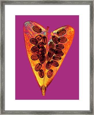 Shepherd's Purse Seed Pod Framed Print by Steve Lowry