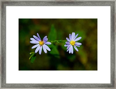 Sherando Lake Wildflowers Framed Print