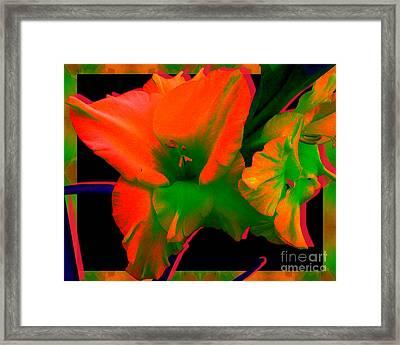 Sherbert Gladiolus Framed Print by Margaret Newcomb