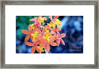 Sherbert Of The Sun Framed Print