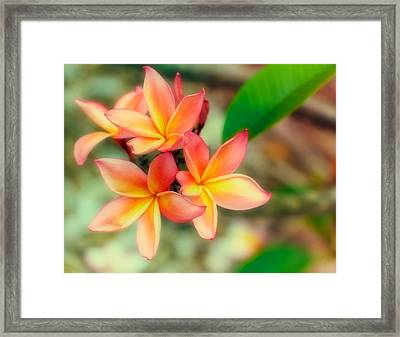 Sherbet Framed Print by Jade Moon