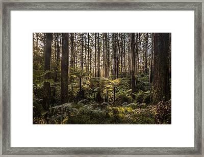 Sherbrooke Forest Framed Print