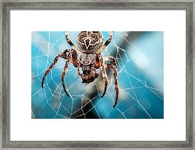 Spider's Web Framed Print