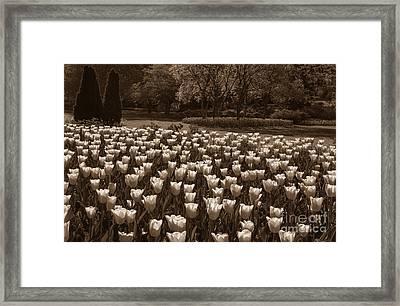 Sherwood Gardens 3 Framed Print by Chris Scroggins