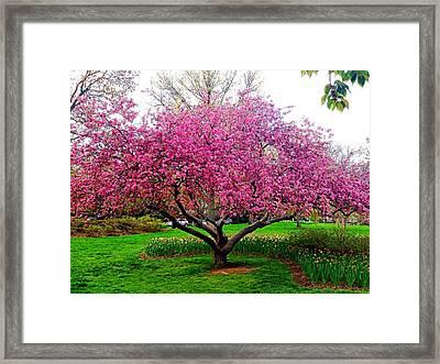 Sherwood Gardens Tree Framed Print