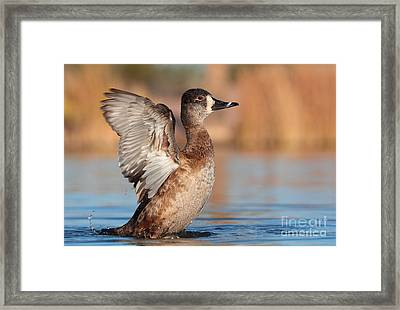 She's A Flapper Framed Print by Ruth Jolly