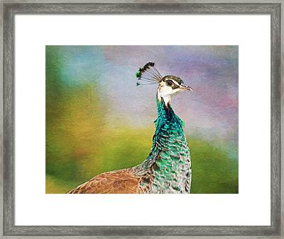 She's A Lady Framed Print by Donna Kennedy