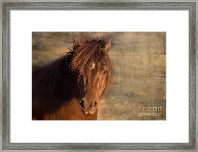 Shetland Pony At Sunset Framed Print
