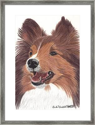 Shetland Sheepdog Vignette Framed Print by Anita Putman
