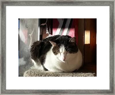 Framed Print featuring the photograph Shhh by Caryl J Bohn