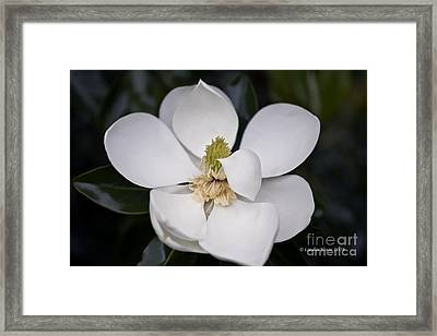 Framed Print featuring the photograph Shhhhh by Linda Blair