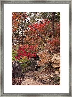 Shifting Colors Framed Print by David Troxel