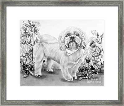 Shih Tzu In Black And White Framed Print