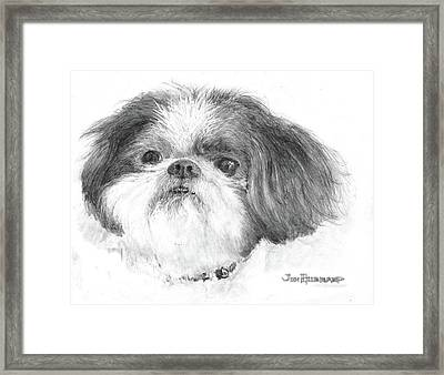 Shih-tzu Framed Print by Jim Hubbard