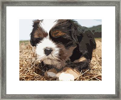 Shih Tzu On A String Framed Print by Robert Margetts