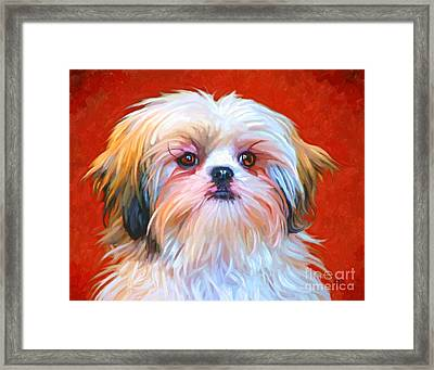 Shih Tzu Painting Framed Print by Iain McDonald
