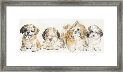 Shih Tzu Puppies Framed Print by Barbara Keith