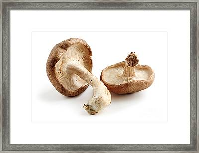 Shiitake Mushrooms Framed Print