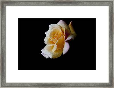 Framed Print featuring the photograph Shimmering by Doug Norkum
