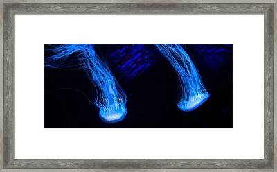 Shimmering Wonders Framed Print