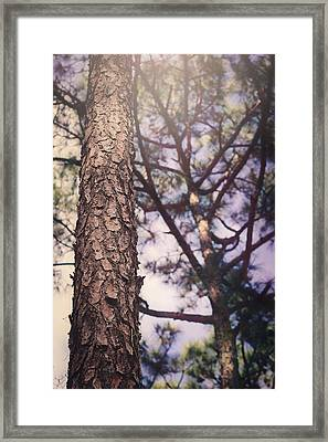 Shine Down Framed Print
