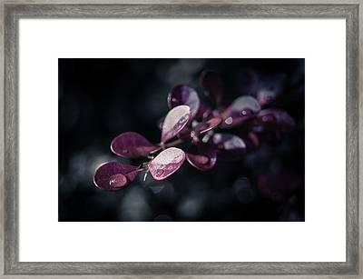 Shine On Framed Print by Jen Baptist