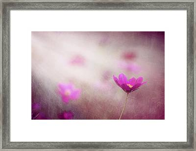 Shine On Me Framed Print by Amy Tyler
