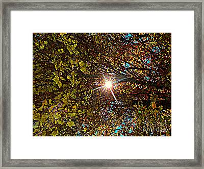 Framed Print featuring the photograph Shine On Me by Geri Glavis