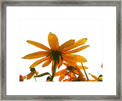 Shine That Bright Framed Print by Lucy D