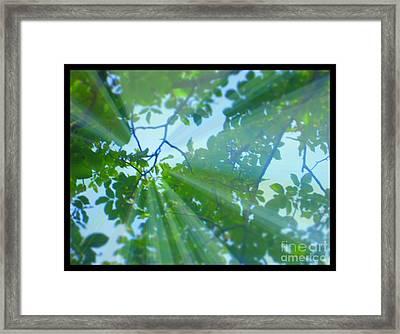 Shine Under Tree Framed Print by Sky Skier