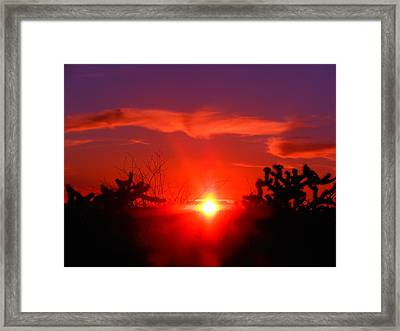 Shineing Star  Framed Print