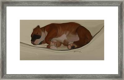 Shiner Baby Framed Print by Nydia Williams