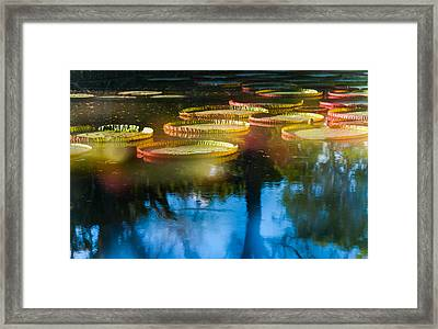 Shining Leaves Of Victoria Regia. Royal Botanical Garden In Mauritius. Impressionistic Framed Print by Jenny Rainbow