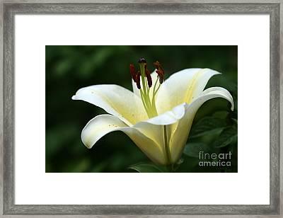 Shining Lily Framed Print