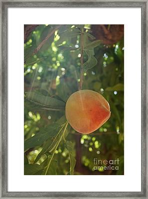 Shining Peach Framed Print by Kerri Mortenson