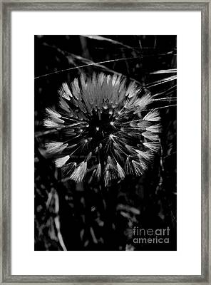 Framed Print featuring the photograph Shining by Simona Ghidini