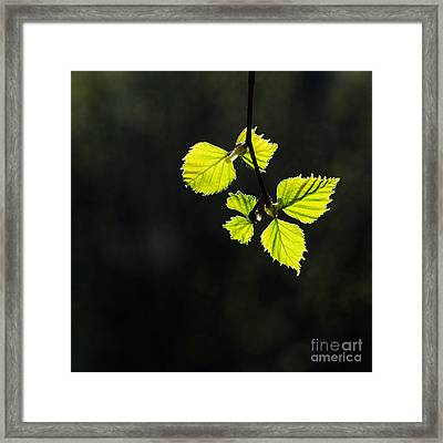 Framed Print featuring the photograph Shining Springtime by Kennerth and Birgitta Kullman