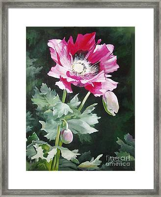 Shining Star Poppy Framed Print