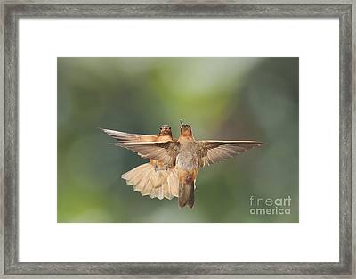 Shining Sunbeam Hummingbirds Framed Print