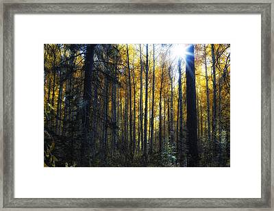 Framed Print featuring the photograph Shining Through by Belinda Greb