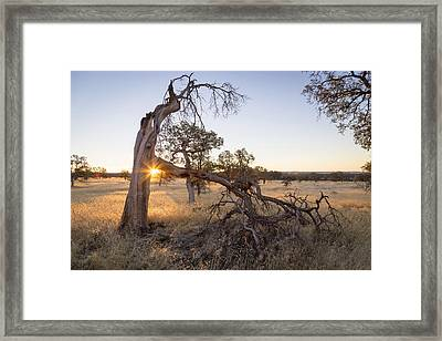Shining Through Framed Print by Lee Harland