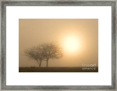 Shining Through Framed Print by Mike  Dawson