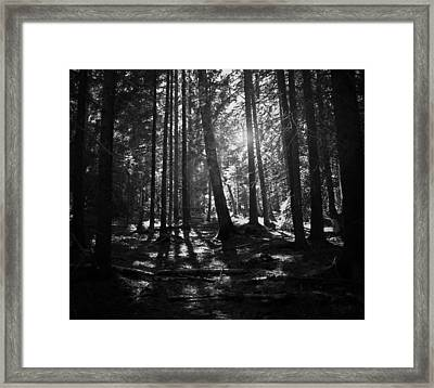 Shining Through Framed Print by Nicklas Gustafsson