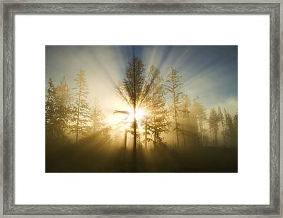 Shining Through Framed Print by Peggy Collins