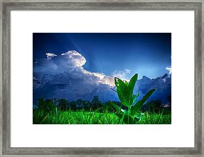 Shining Through Framed Print by Ryan Crane
