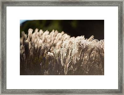 Shining Weeds Framed Print by Mike Lee