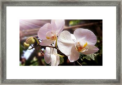 Fresh Elegance Framed Print