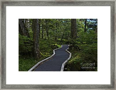 Framed Print featuring the photograph Shinrin Yokin by Sandi Mikuse