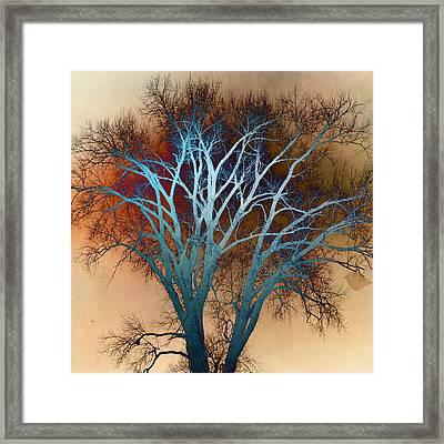 Shiny Tree Framed Print